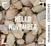 hello november greeting text on ... | Shutterstock . vector #1202190145
