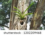 wild orchid on the tree in the... | Shutterstock . vector #1202209468