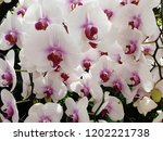 purple orchids are blooming. | Shutterstock . vector #1202221738