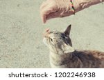 cat eating from the hand of an... | Shutterstock . vector #1202246938