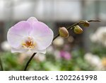 beautiful close up orchid in... | Shutterstock . vector #1202261998