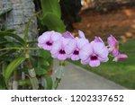 orchid in garden | Shutterstock . vector #1202337652
