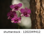 close up  thai  orchid in... | Shutterstock . vector #1202349412