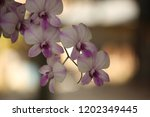 close up  thai  orchid in... | Shutterstock . vector #1202349445