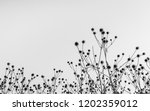 Black And White Image Of Wilted ...