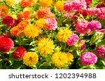 flowers in a garden | Shutterstock . vector #1202394988