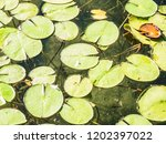 lily pads close up | Shutterstock . vector #1202397022