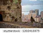 the famous apes of gibraltar ... | Shutterstock . vector #1202413375