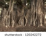 A Photo Of A Tropical Tree In...