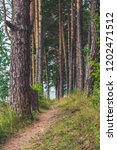 a footpath in a forest in...   Shutterstock . vector #1202471512