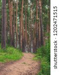 a footpath in a forest in...   Shutterstock . vector #1202471515