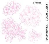 decorative oleander flowers set ... | Shutterstock .eps vector #1202526055