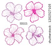 decorative hibiscus flowers set ... | Shutterstock .eps vector #1202527105