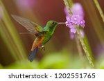 close up  shining green ... | Shutterstock . vector #1202551765