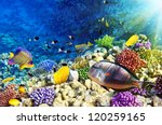coral and fish in the red sea... | Shutterstock . vector #120259165