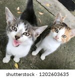 Stock photo funny cute striped shorthair kitten beautiful cat sitting of smiling cat kitten faces looks up 1202603635