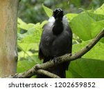 black and gray bird perched in... | Shutterstock . vector #1202659852