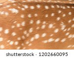 Deer Skin Pattern White Spot In ...