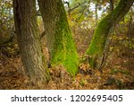 quiet autumn forest  closeup... | Shutterstock . vector #1202695405