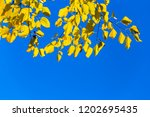 closeup red dry tree branch on... | Shutterstock . vector #1202695435