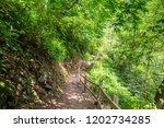 path through a spring forest in ... | Shutterstock . vector #1202734285