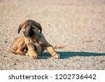 little  lovely  fluffy  cute... | Shutterstock . vector #1202736442