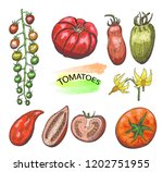 hand drawn colored tomatoes set ... | Shutterstock .eps vector #1202751955