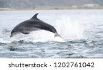 wild dolphin in playful mood... | Shutterstock . vector #1202761042