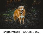 portrait of cur dog in the... | Shutterstock . vector #1202813152