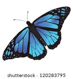 butterfly | Shutterstock .eps vector #120283795