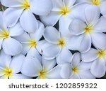 white flowers on the ground ... | Shutterstock . vector #1202859322