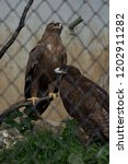 24 sep 2009 eagle in pt. g.b.... | Shutterstock . vector #1202911282