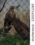 24 sep 2009 eagle in pt. g.b.... | Shutterstock . vector #1202911285