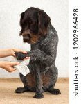 hands cleaning the dog's dirty... | Shutterstock . vector #1202966428