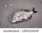 Dead Fish On The Floor Or By...