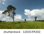 trees in green field with blue... | Shutterstock . vector #1203159202