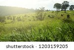 trees in green field with blue... | Shutterstock . vector #1203159205