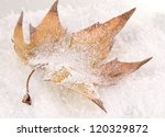 Fallen Leaf On Snow