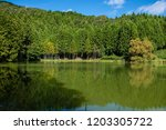 mysterious pond and specular... | Shutterstock . vector #1203305722