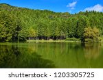 mysterious pond and specular... | Shutterstock . vector #1203305725
