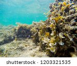 colorful seabed with seaweeds... | Shutterstock . vector #1203321535