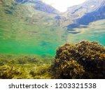 seabed in alghero clear sea.... | Shutterstock . vector #1203321538