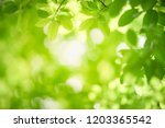 closeup nature view of green... | Shutterstock . vector #1203365542
