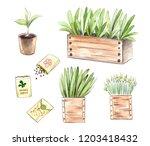 watercolor seedlings and... | Shutterstock . vector #1203418432