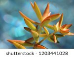 beautiful green succulent pant... | Shutterstock . vector #1203441028