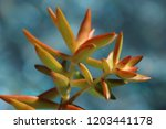 beautiful green succulent pant... | Shutterstock . vector #1203441178