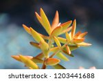 beautiful green succulent pant... | Shutterstock . vector #1203441688