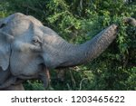 incredibly detailed and close... | Shutterstock . vector #1203465622