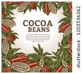 cacao beans plant  vector... | Shutterstock .eps vector #1203536362