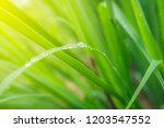 green nature backgrond.water... | Shutterstock . vector #1203547552